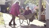 Happy little girls with wheelbarrow in backyard,autumn season, sunny day. Childhood outdoor.