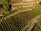 Valtellina (IT) - Vista aerea dei vigneti in zona Grumello - Autunno