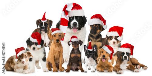 Deurstickers Franse bulldog Weihnachtswelpen