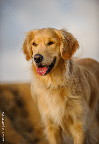 Poszter Golden Retriever dog standing against bluffs and sky