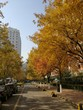 Autumn in a Chinese residential area