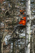 Deer Hunter in a Tree Stand