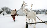 Reindeer breeder dressed in national Same clothes with a reinde