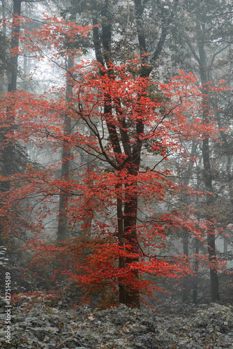 Foto op Canvas Cappuccino Beautiful surreal alternate color fantasy Autumn Fall forest lan