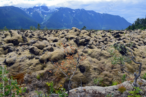 Poster Lichen covered rocks and mountains in Nisga'a Memorial Lava Bed, British Columbi