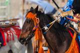 Yabusame Horse