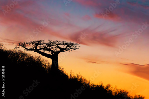 Papiers peints Baobab Baobab tree silhouette after sunset Madagascar
