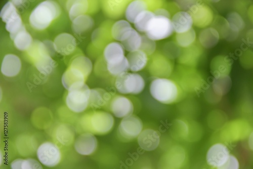 Poster Bokeh natural color background, colorful  leaf of the tree