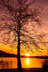 Fototapeta samotne drzewo zachód słońca