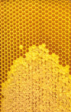 Honeycomb close-up.