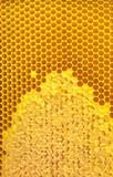 Honeycomb close-up.