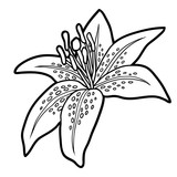 Coloring book, flower Lily