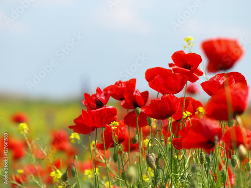 Foto op Canvas Rood traf. Summer wildflowers and clouds