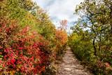 bucolic walk in autumnal karst forest