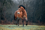 Wild dirty free horse mustang  - 127692934