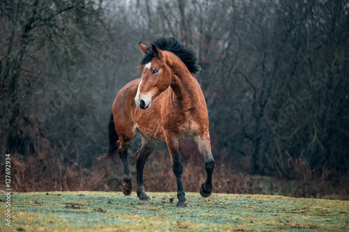 Wild dirty free horse mustang Plakát