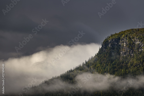 Clouds covering the pine forest giving a magical and mysterious effect on this landscape