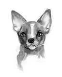 Chihuahua dog, cute face, Chiwawa puppy, watercolor illustration