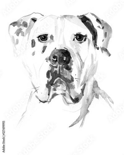 Watercolor hand drawn dog American Bulldog - 127699915