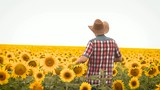 dance man in hat on field with yellow sunflowers on background of blue sky, outdoor recreation