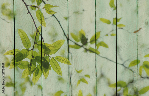 Naklejka na szybę Wood background with green leaves overlay