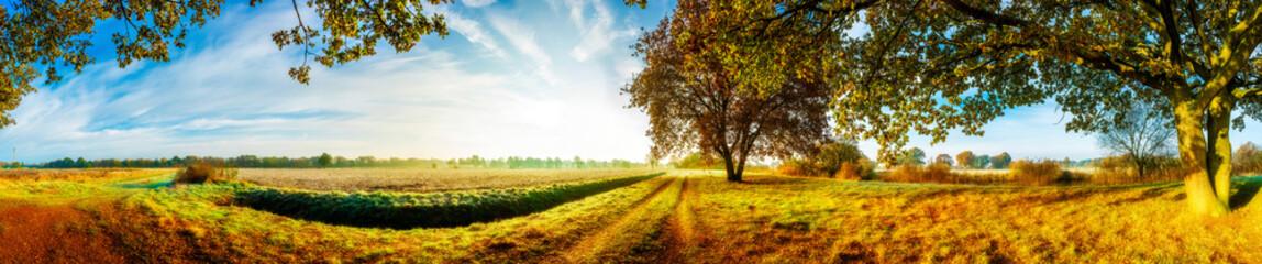 Fototapeta letnia panorama widok z drzewami