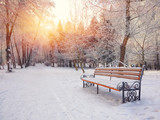 Fototapety Park bench and trees covered by heavy snow