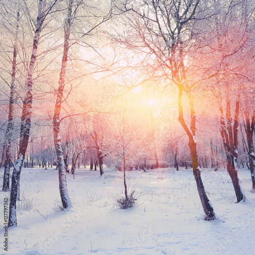 Foto op Canvas Wit Beautiful winter sunset with trees in the snow