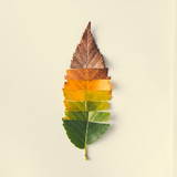 Fototapety Creative layout of colorful autumn leaves.