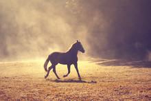 Belle lumière du soleil matinal prairie brumeuse avec cheval brun domestique.