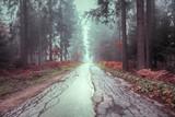 Piękna, zamglona, popękana asfaltowa droga przez las