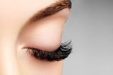 Beautiful macro shot of female eye with extreme long eyelashes and black liner makeup. Perfect shape make-up and long lashes. Cosmetics and make-up. Closeup macro shot of fashion eyes visage - 127818109