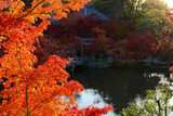 Fall maple leaves glowing bright red in the evening autumn sun by a peaceful pond