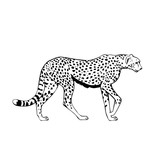 black and white cheetah illustration