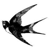 sketch tattoos flying swallow - 127854735