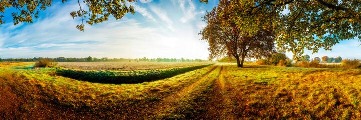 Fototapeta droga z drzewami panorama