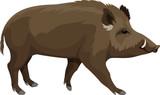 vector wild hog boar mascot - 127872128