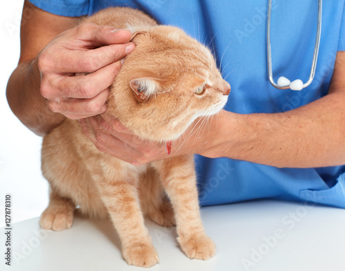 Cat and veterinarian doctor © Kurhan