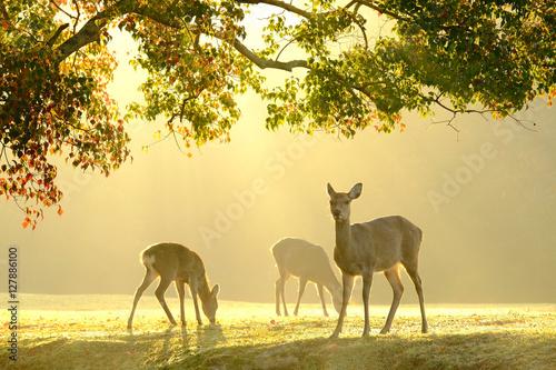 Poster 奈良の鹿