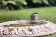 Bird on a bath