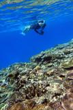 珊瑚礁とシュノーケラー