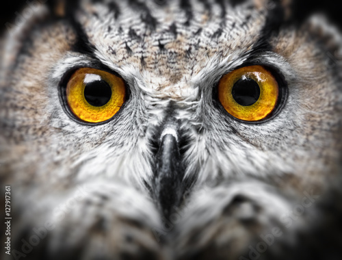 Zdjęcia na płótnie, fototapety na wymiar, obrazy na ścianę : Owl Portrait. owl eyes
