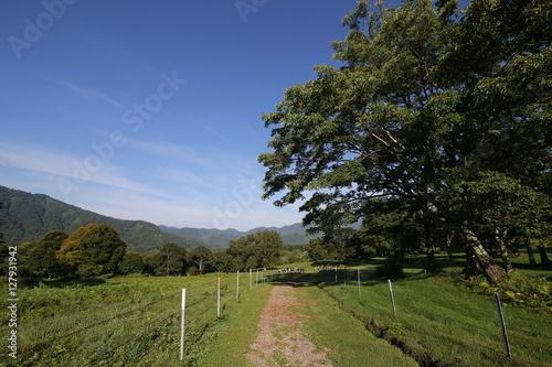Poster 牧場の風景