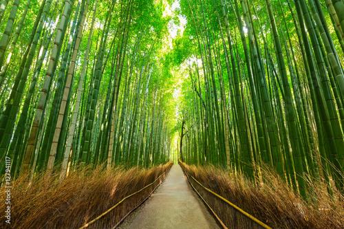 Fotobehang Bamboe Arashiyama bamboo forest in Kyoto Japan