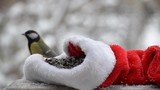 Birds pecking seeds in the winter for Christmas. On the snowy background. Close-up.