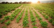 plantation vert sur le terrain
