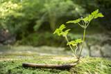 Piccolo germoglio di una pianta verde illuminato dalla luce del sole
