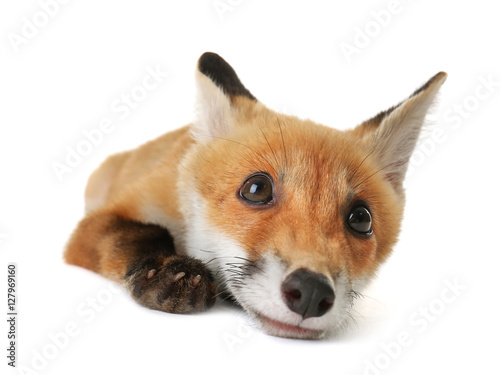 Portrait of cute little fox cub on white background