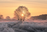 Christmas background with rising sun and white grass
