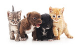 Kittens and puppies. - 127985991